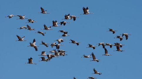 Estas son las aves más amenazadas de España por no cumplirse la ley