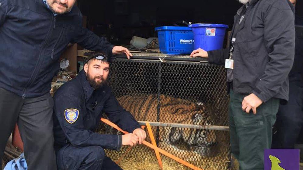 Foto: Los responsables de BARC, junto al tigre en su diminuta jaula (Foto: Facebook)