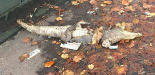 Post de Descubren el cuerpo de un cocodrilo en una calle de Liverpool