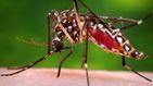 Confirmado el tercer caso de dengue contraído en España
