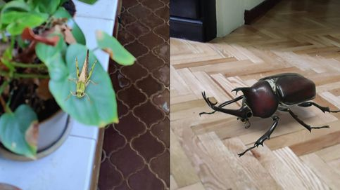 Así funciona la 'app' de Google para ver todo tipo de insectos en 3D