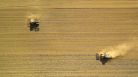 La crisis climática nos obligará a cambiar lo que cultivamos