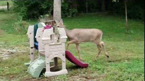 Este pequeño bambi se lo pasa genial en un parque infantil