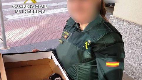 Rescatan cinco cachorros con síntomas de asfixia en un contenedor de Castellón