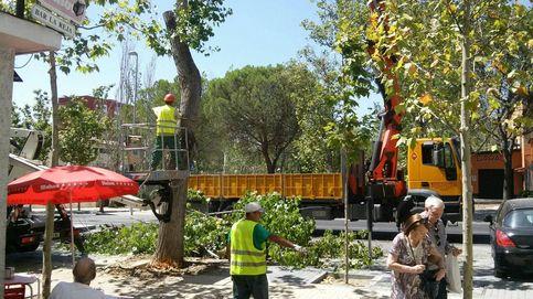 El interventor: Carmena paga 9 millones sin contrato para cuidar árboles