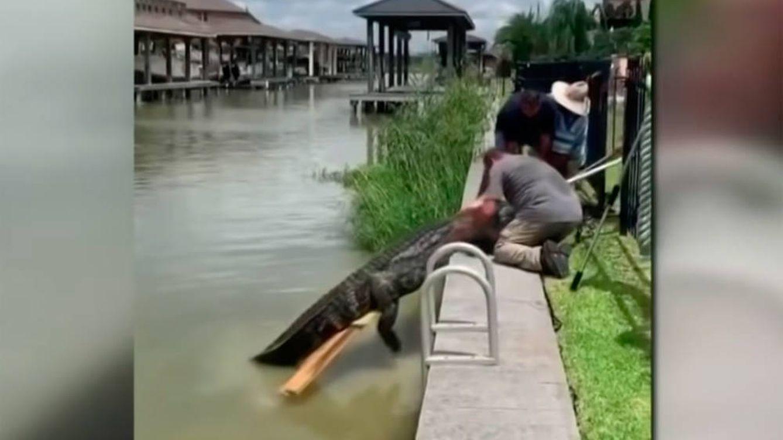 Un padre salva a su hija de 4 años de un caimán de más de 3 metros y medio