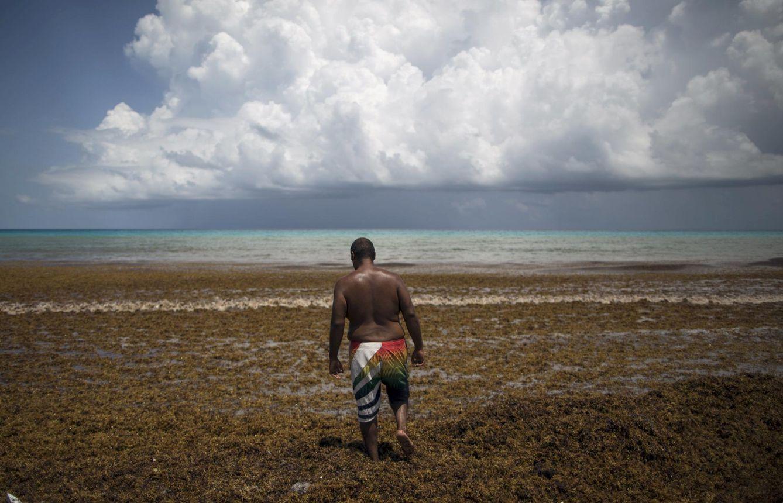 Foto: Un hombre camina entre las algas en la playa Gaviota Azul, en Cancun, México, el 17 de julio de 2015 (Reuters).