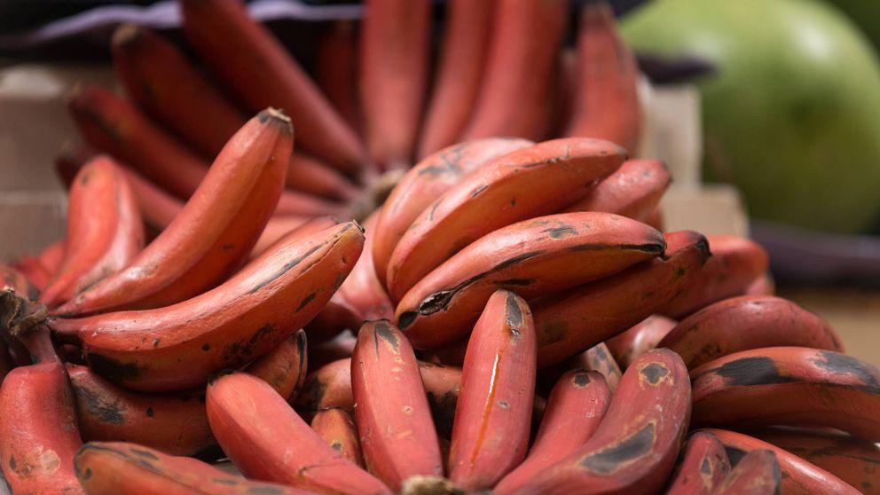 Así es el plátano rojo que tiene sabor a frambuesa y se cultiva en España