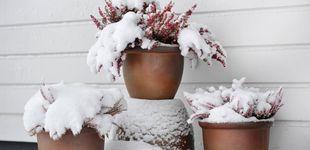 Post de Consejos para proteger tus plantas antes y después de sufrir la nieve y el hielo