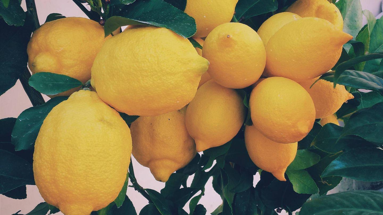 La dieta del limón aprovecha las propiedades de esta fruta. (Ernest Porzi para Unsplash)