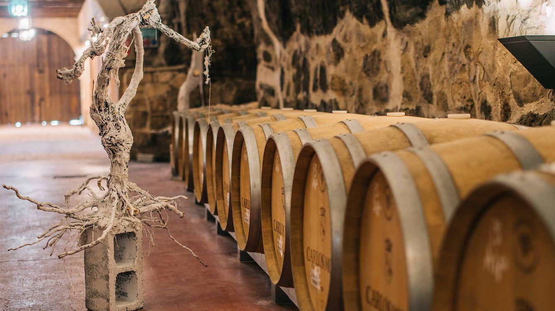 Foto: Su historia cuenta cómo los viñedos van modificándose en función del entorno, la tierra y la mano que los cuida.