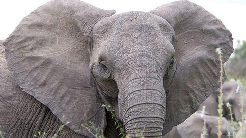 Papel hecho con estiércol de elefante, la apuesta del Zoo de Praga por el reciclaje