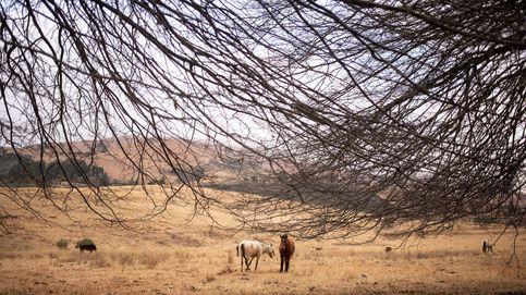 Denuncian a un hombre por apalear a un caballo en Lugo
