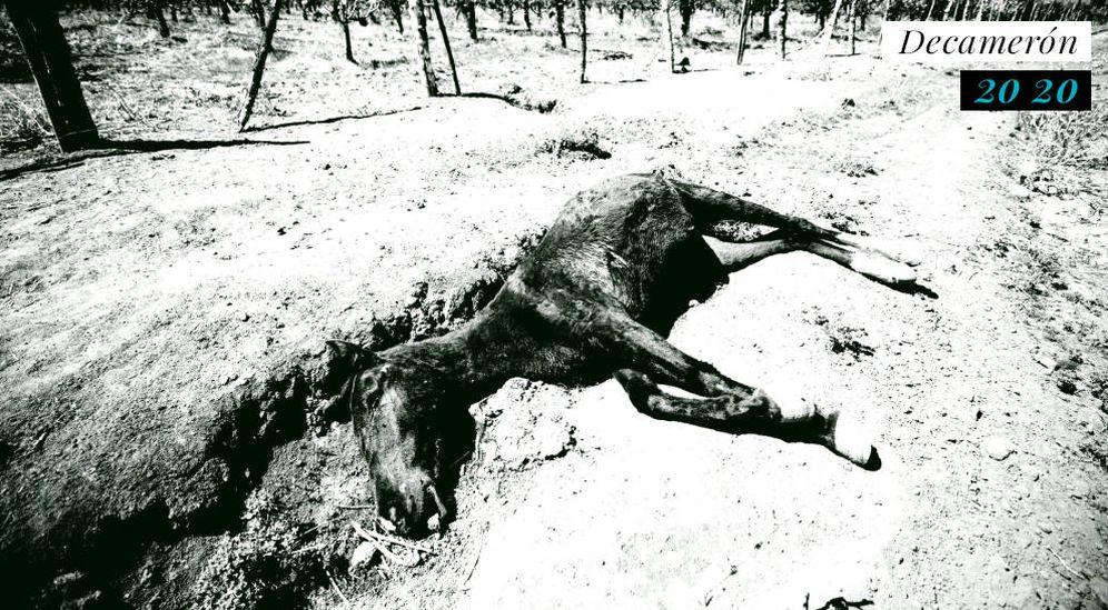 Foto: Muerte de un caballo