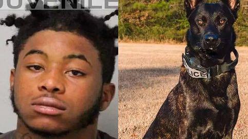 Condenado a 25 años de cárcel por matar a un perro policía en Estados Unidos
