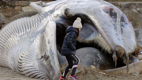 Una ballena en A Coruña y huelga de taxistas: el día en fotos