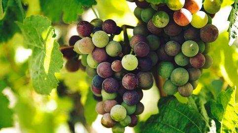 El calentamiento global podría destruir la mayor parte del vino español