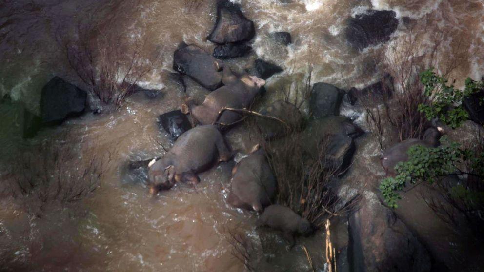 11 elefantes mueren en Tailandia al tratar de salvar a una cría en unas cataratas