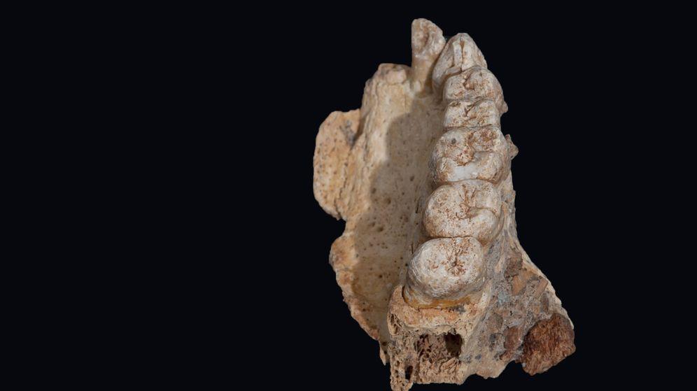 Foto: Mandíbula encontrada en Monte Carmelo (Science)
