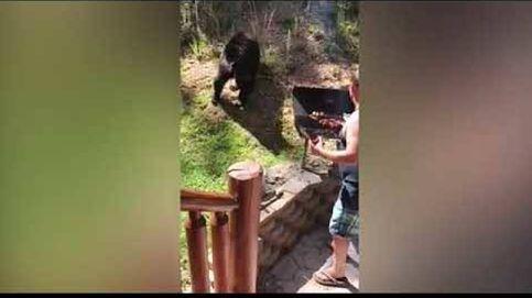 Un oso salvaje se cuela en una barbacoa para robar comida