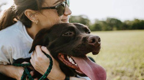 Un perro demuestra ser el más fiel: recorre 380 kilómetros para volver a casa
