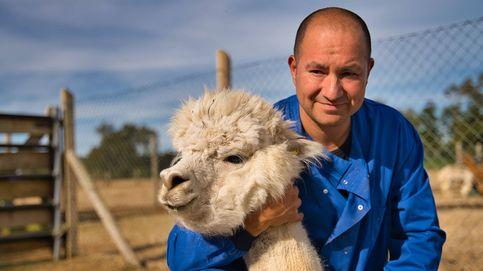 Del murciélago a la alpaca: el animal más adorable puede generar un 'anticoronavirus'