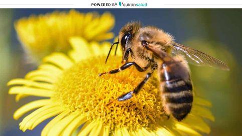 El barro para las abejas y otras falsas creencias sobre las picaduras de insectos
