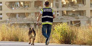 Foto: Policías con sueldos millonarios: el premio de ser destinado a una embajada