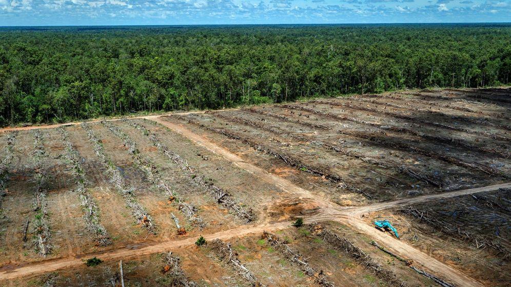 Foto: Una plantación de aceite de palma en Indonesia. (Reuters)