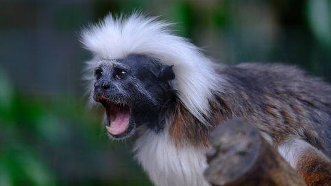 ¿Por qué tenemos un cerebro más grande que los monos?