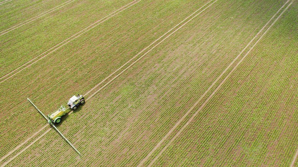 Foto: Plantación de remolacha azucarera en Mustedt (Alemania). (EFE)