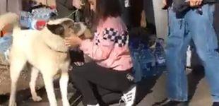 Post de Encuentran a su perro perdido en los incendios de California 101 días después