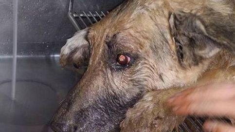 Un perro sobrevive después de pasar tres días enterrado vivo