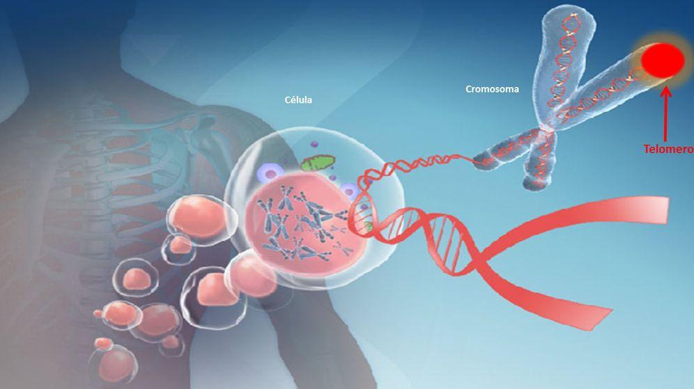 Foto: Los telómeros son regiones de adn ubicadas en los extremos de los cromosomas. (life length)