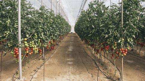 La fiebre del 'agrobusiness': los fondos buscan en la tierra lo que no da el mercado