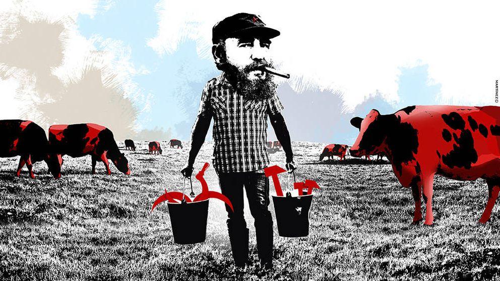 Las vacas comunistas de Fidel dan más leche