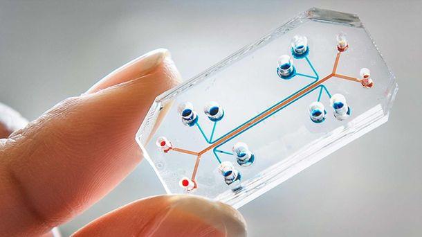 Foto: Microchips que se comportan como órganos humanos, elegidos el diseño del año
