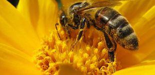 Post de Nivel de polen en el aire: consulte la intensidad de la alergia en su provincia