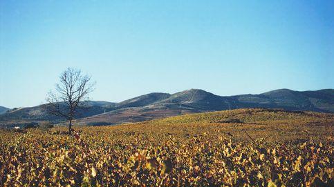 Peique Mencía 2013, la máxima expresión de esta uva procedente del Bierzo
