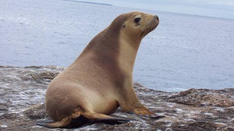 Varios leones marinos aparecen muertos por disparos de bala en Estados Unidos