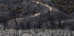 Post de Cambio climático, comodín de desastres