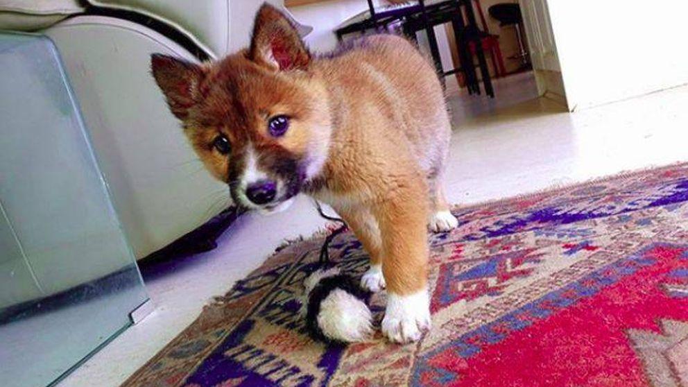 Un perro adorable cae del cielo y las pruebas genéticas revelan su increíble origen