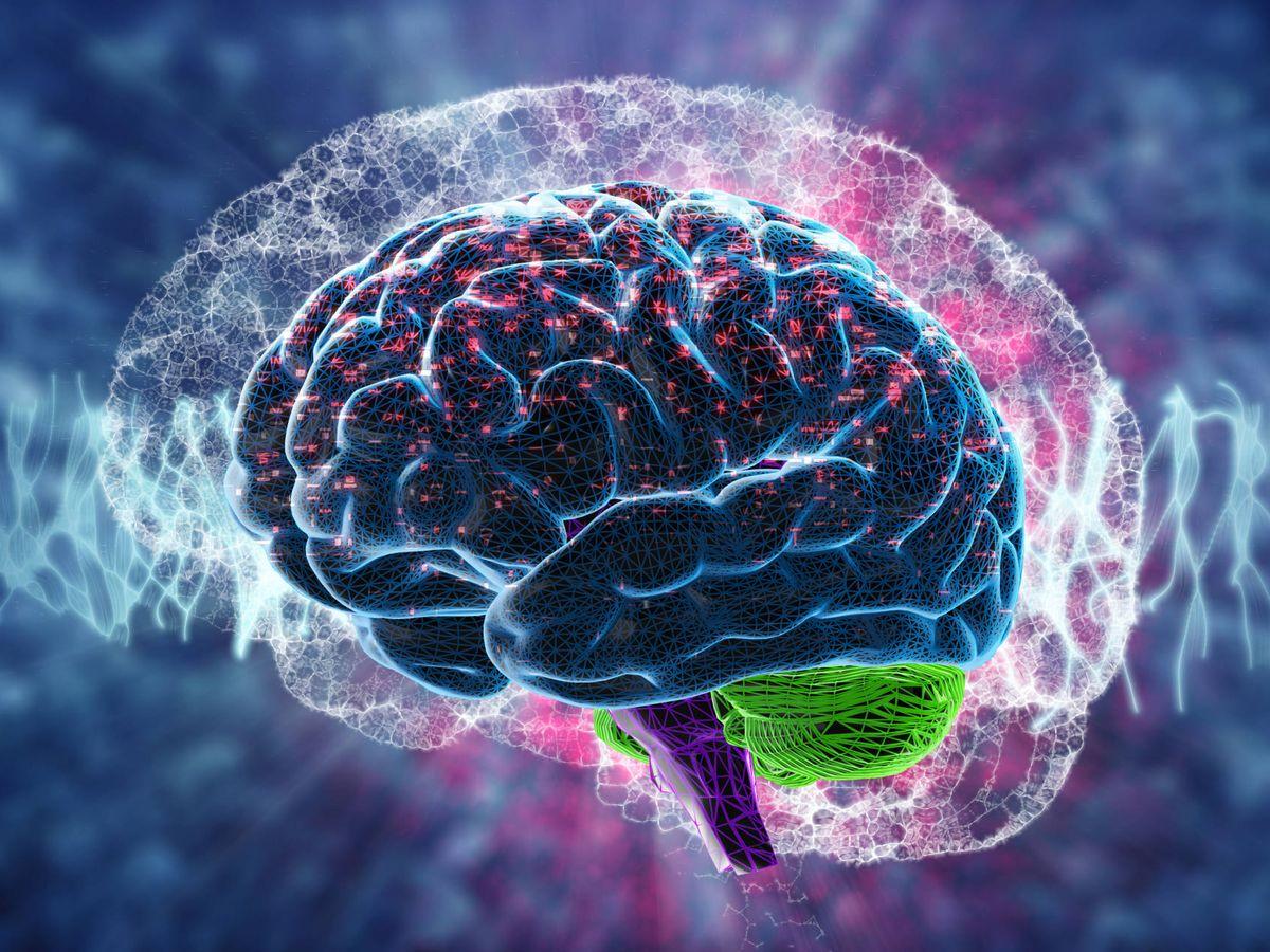 La zona del cerebro que es más importante para perder peso que tu fuerza de  voluntad