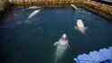 Canadá prohibirá por ley la cautividad de delfines y ballenas en acuarios y parques