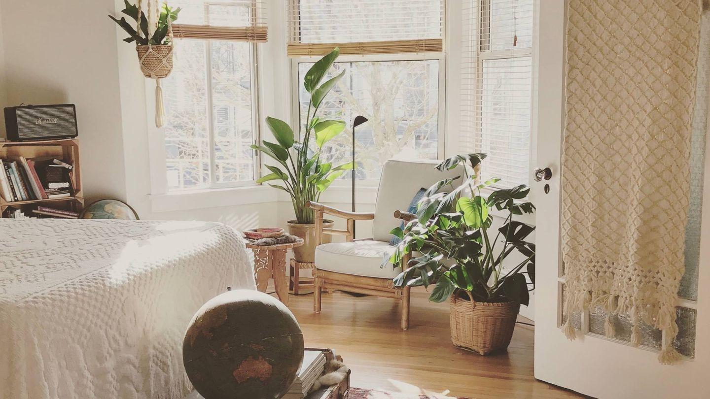Plantas en casa. (Timothy Buck para Unsplash)