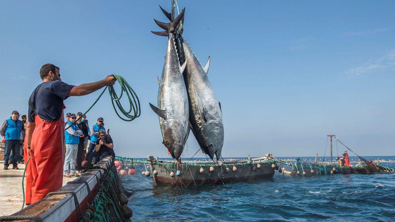 La almadraba de la localidad gaditana de Barbate, durante la 'levantá' de atún rojo. (EFE)