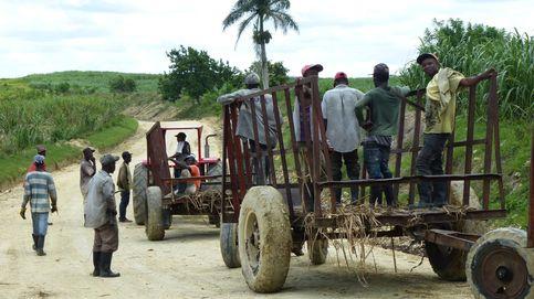 Azúcar amargo: el 'apartheid' dominicano que sustenta la industria de la caña