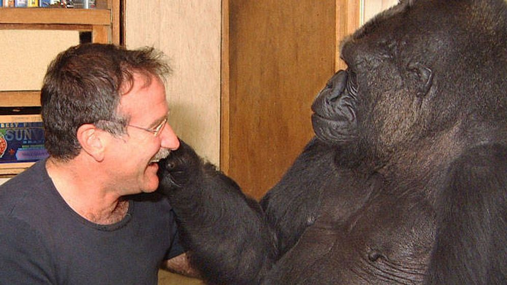 Foto: Koko jugando con Robin Williams