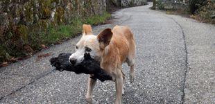 Post de La foto de la perrita con su cría calcinada en los incendios: