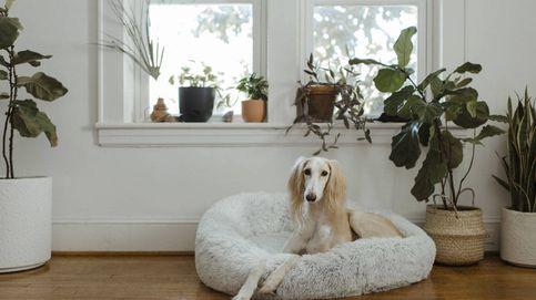 Plantas de interior 'pet friendly' que decoran y cuidan de tus mascotas
